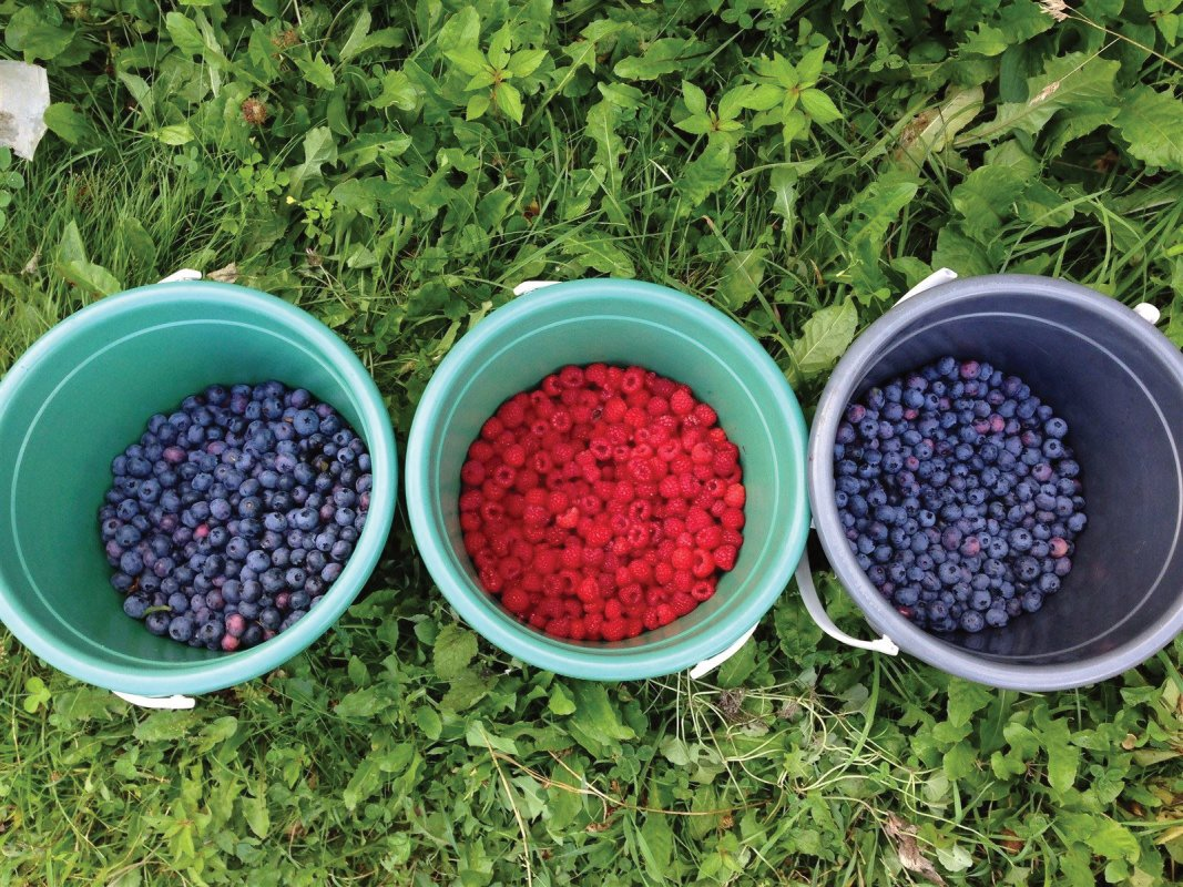buckets of blueberries and strawberries