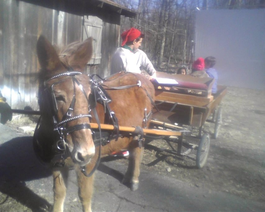 Horseback Riding, Horse Trail Rides, Horse Rentals, Pony Rides, Pony Parties, Pony Rentals