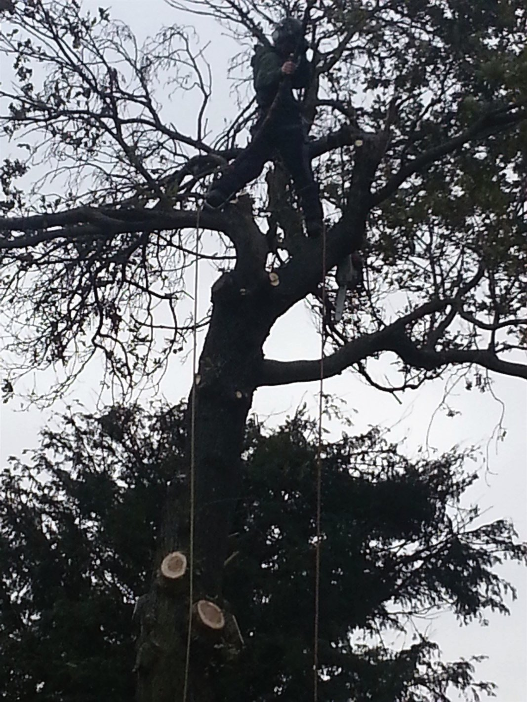 Tree felling and maintenance in industrial areas, factory grounds and business parks in Edinburgh, Midlothian, East Lothian, Fife and the Scottish Borders regions