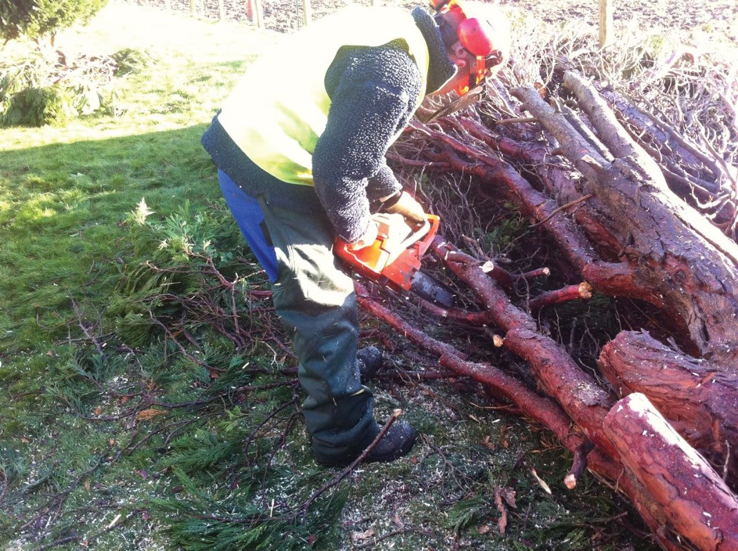 Storm felled tree removal in Midlothian, East Lothian, Fife and the Scottish Borders regions