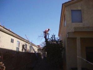 Tucson, Arizona has a top Tree Service.