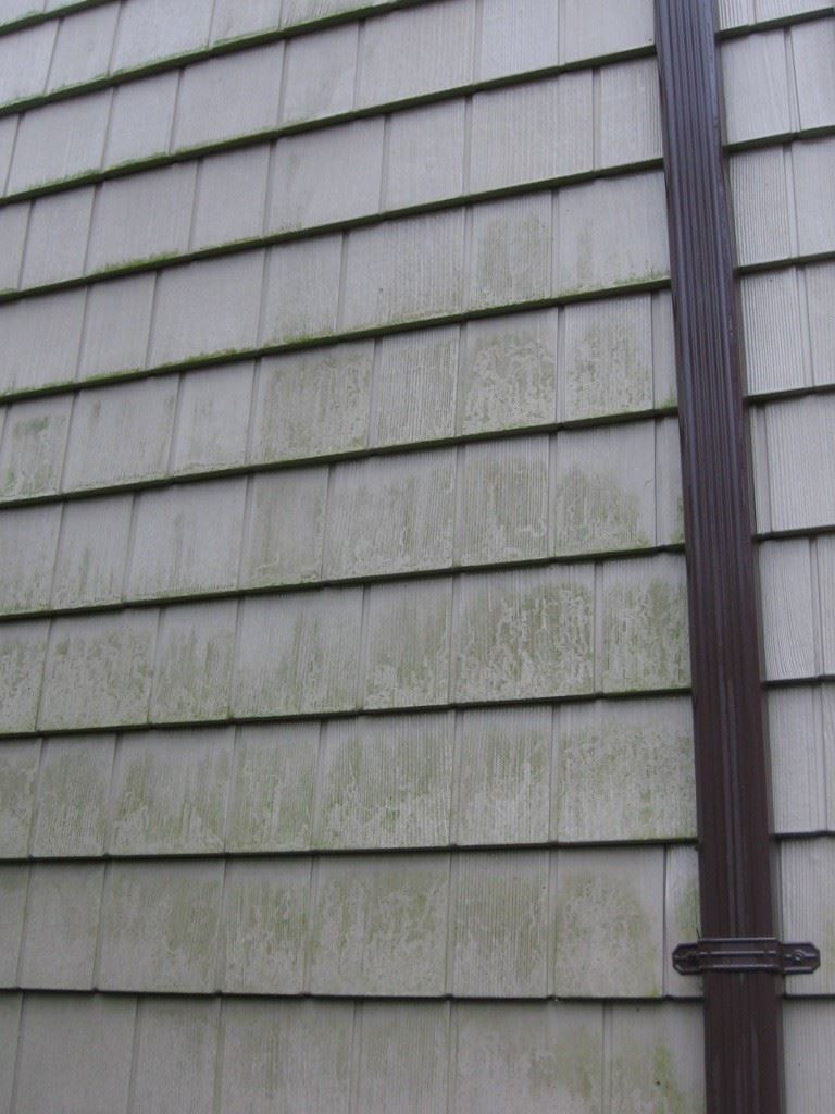 Vinyl siding mold and mildew : Before washing