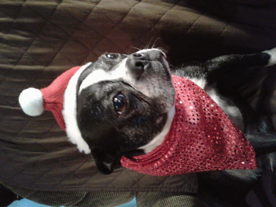 Christmas Dog Bandannas