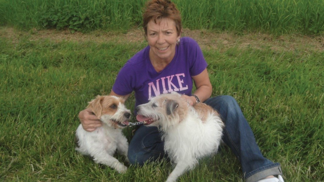 Dog Walking with Spencer and Patch in fields at croydon herts. Dog walking and pet care services Royston herts make sure they have a great time out with us.
