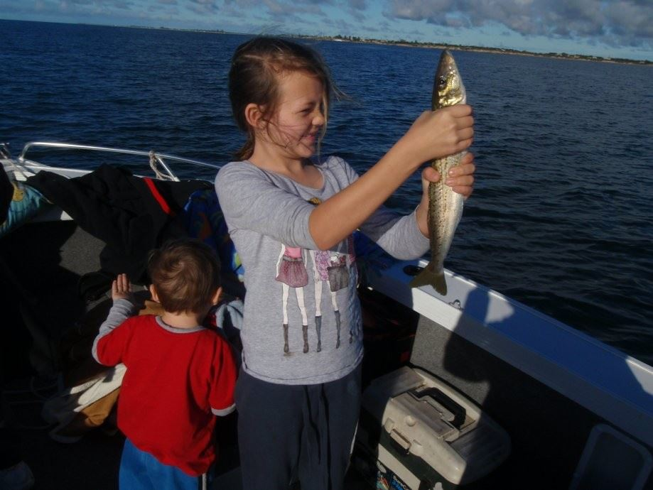 A solid King George whiting caught in SA waters using a 30 lb wind on leader