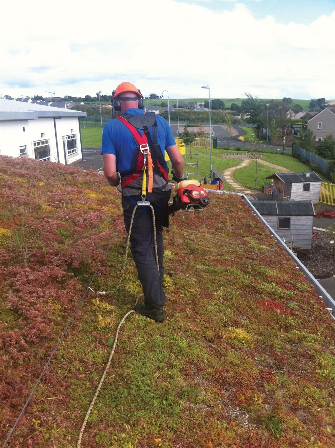 Strimming the Sedum roof as part of it's maintenance programme