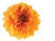 I've heard the marigold mentioned several places as good to eat. I do think this would be a perfect flower for a fall wedding for orange color lovers.