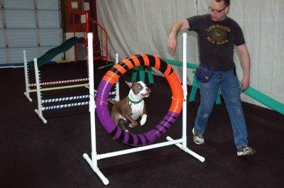 training a dog, dog obedience, puppy training