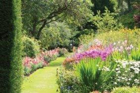Jardin de plantes vivaces - IMMOVERT