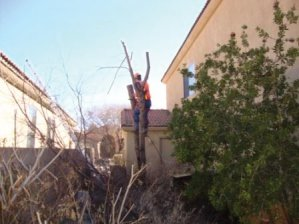 Tree Removal in Tucson, Arizona