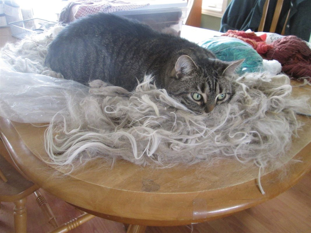 Pixel demonstrates you never know what could be lurking in your fibre.