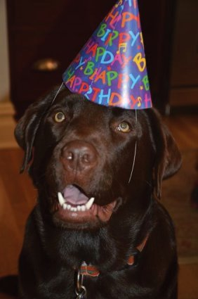 Happy 1st Birthday Winston