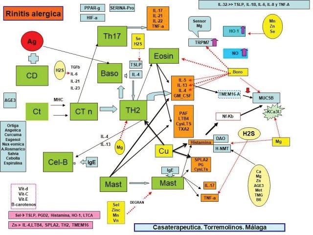 Secuencia en la Rinitis Alérgica. explicación en el texto