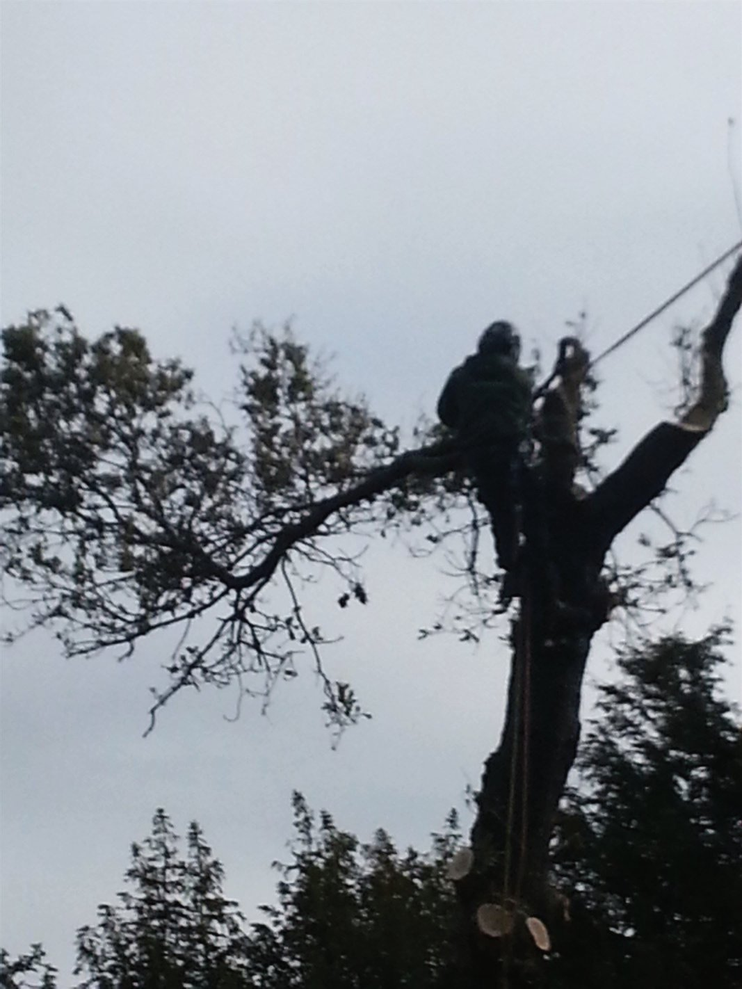 Qualified professional tree surgeon services in Edinburgh, Midlothian, East Lothian, Fife and the Scottish Borders regions