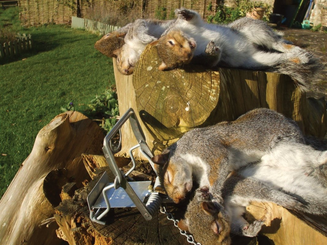 Bright winter days bring out squirrels - like these caught by Barron Pest Control in a garden in Bath