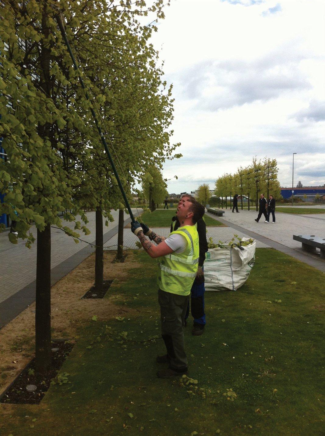 Tree pruning in Edinburgh, Midlothian, East Lothian, Fife and the Scottish Borders regions