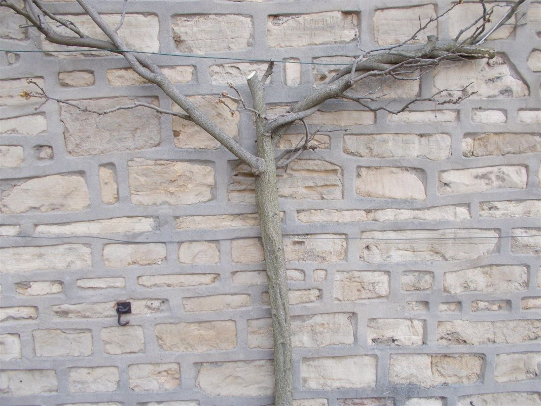 picture showing the mortar joints   leeds pointing free surveys and quotes
