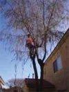 Tree Removal in Tucson, Arizona.
