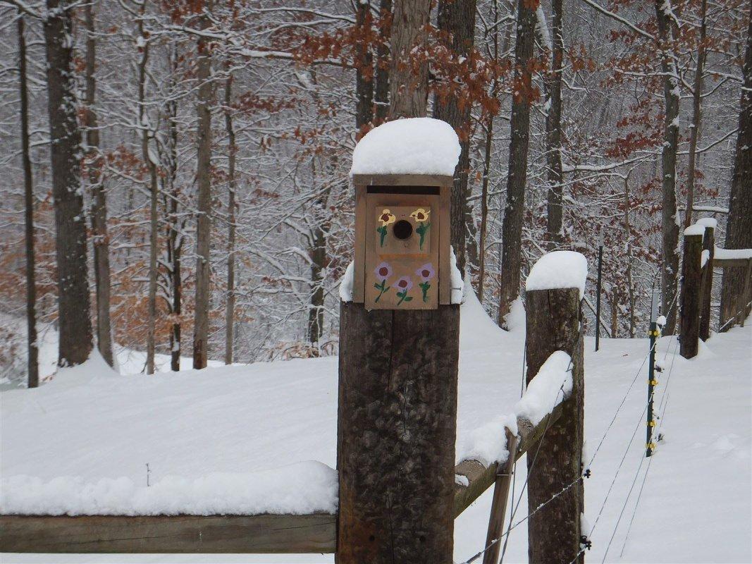 Bird house in the blizzard