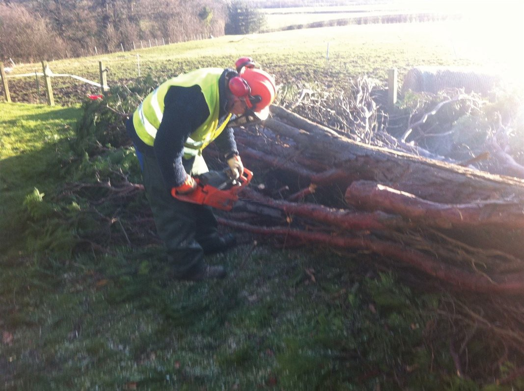 Storm felled tree removal in  industrial areas, factory grounds and business parks in Edinburgh, Midlothian, East Lothian, Fife and the Scottish Borders regions