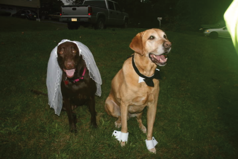 Cocoa & Darby greeting their guests at the reception.