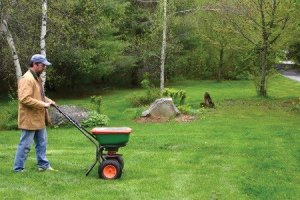 Fertilize and Reseed the Lawn