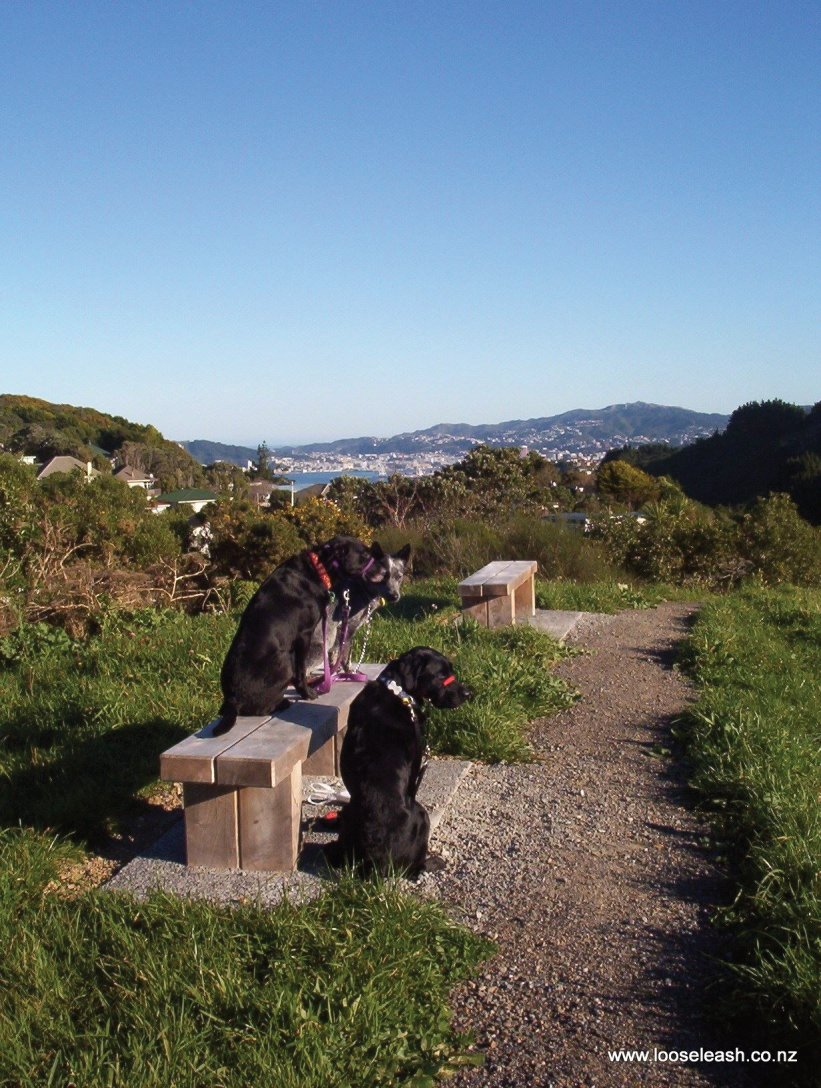 Lyndfield Lane Park Bush Walk along ridge, dogs enjoying the view and bench seat. Loose Leash Dog Walking Service Newlands Johnsonville Wellington