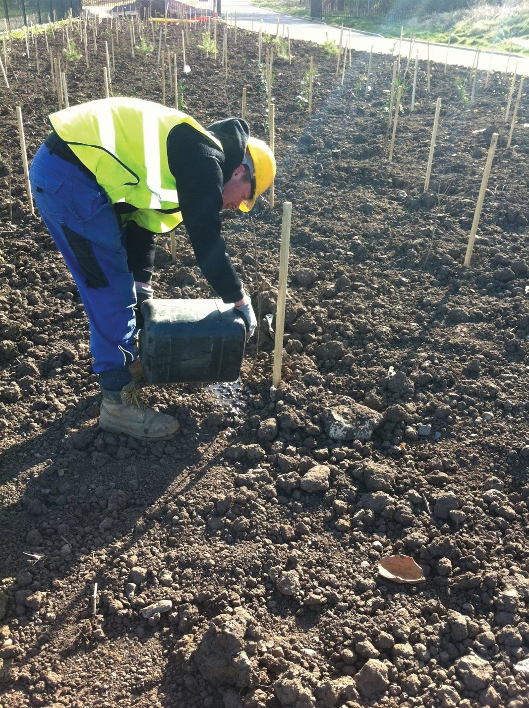 Soft landscape planting works for schools, offices, industrial areas, factory grounds and business parks in Edinburgh, Midlothian, East Lothian, Fife and the Scottish Borders regions