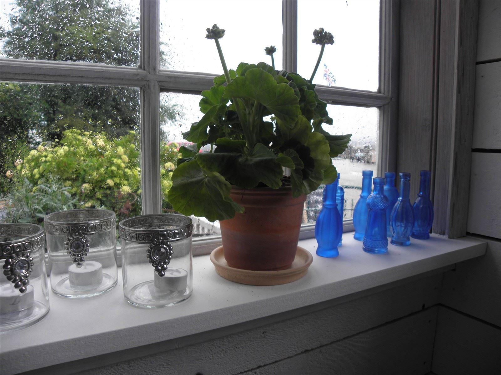 Dr Mary pelargon i Kullabygdens keramikkruka med blåaste flaskor till granne