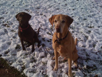 Cocoa & Darby taking a break from playing in the snow.