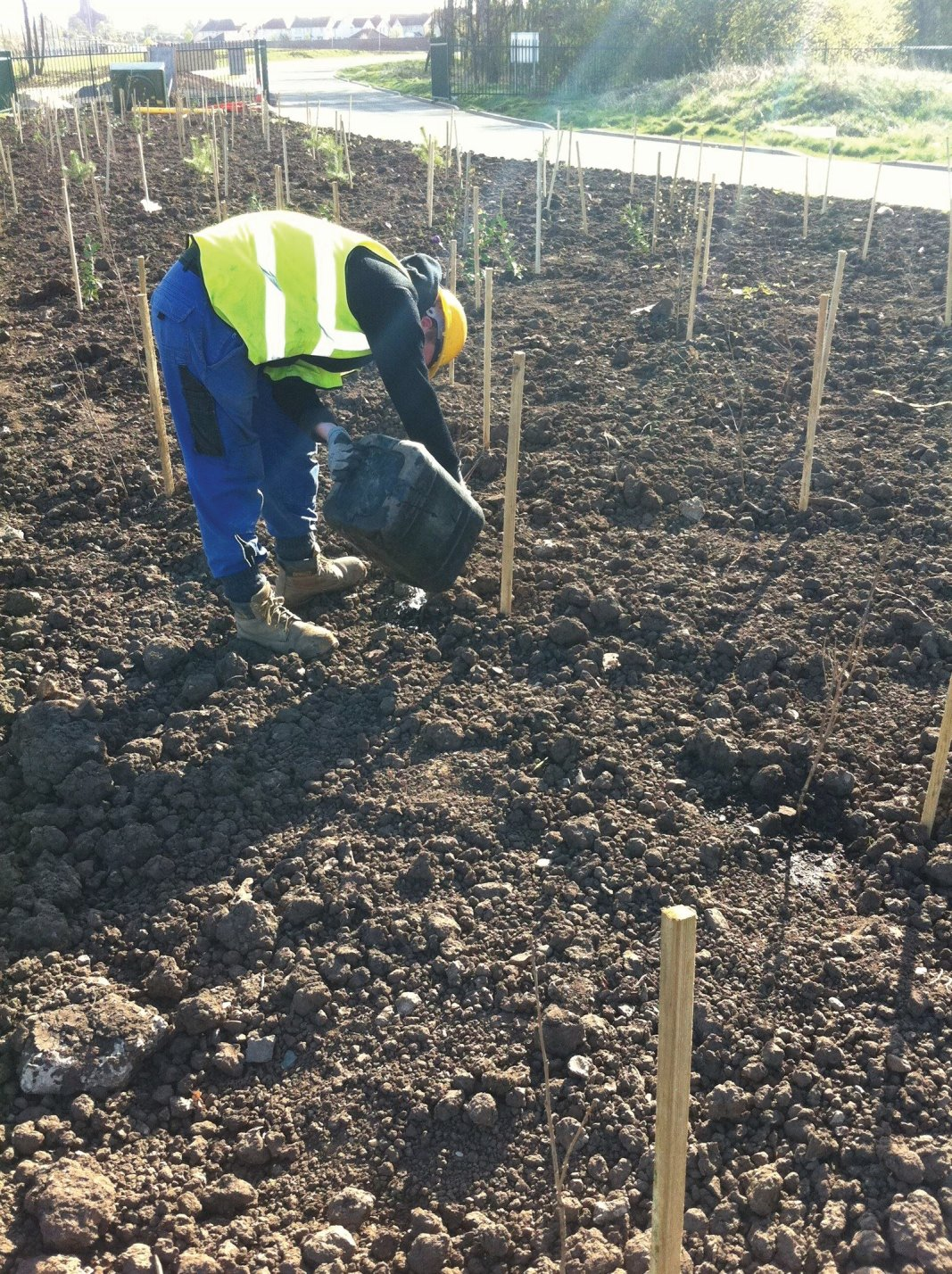 Tree and hedge planting for factory grounds and business parks in Edinburgh, Midlothian, East Lothian, Fife and the Scottish Borders regions