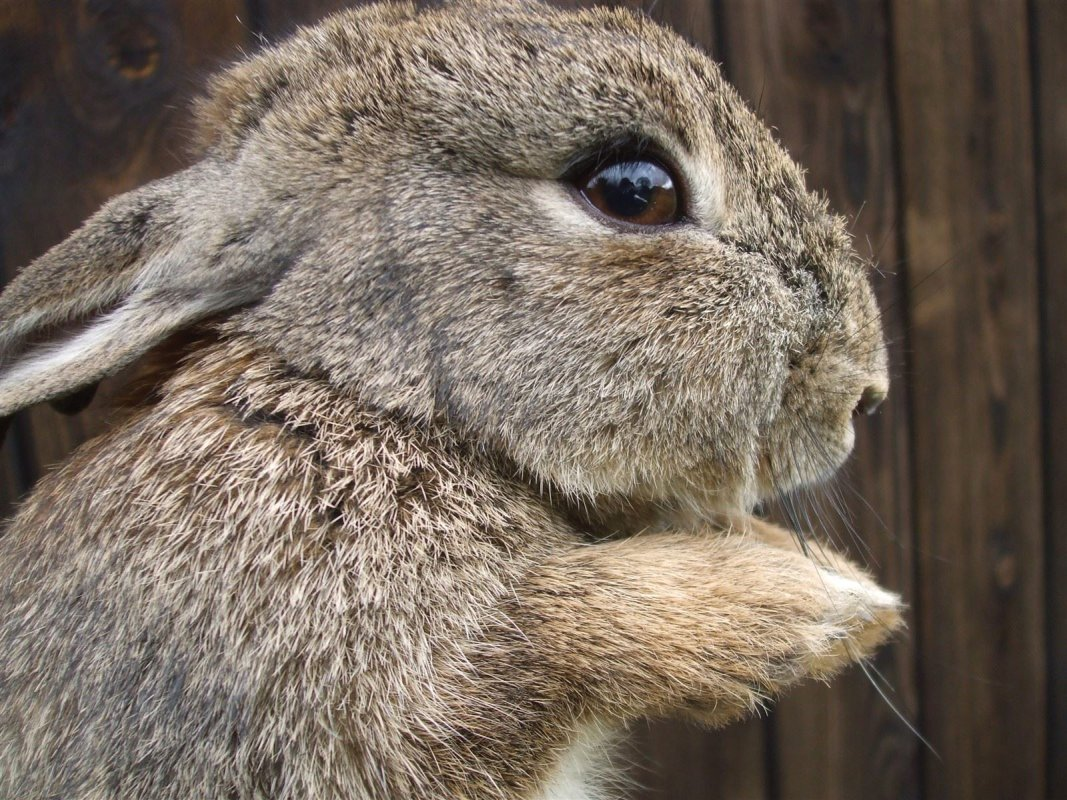 Young rabbits can cause problems for gardeners.