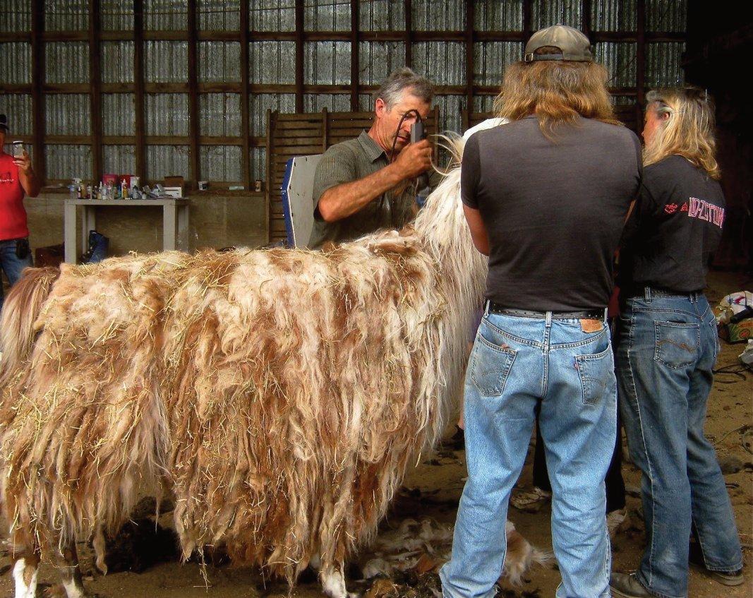Llama Fibre is heavier than Alpaca Fibre