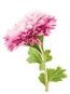 One plate of these coming up. It definately adds color to our salads especially those pink lovers.