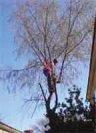 Tree Service Landscaping in Tucson, Arizona.