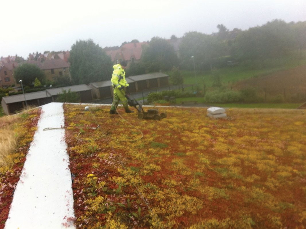 Mowing the Sedum roofing as part of it's maintenance programme