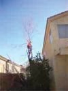 Tree Service in Tucson, Arizona.