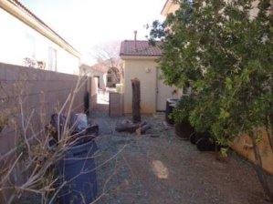 Tucson, Arizona's top Tree Service company.
