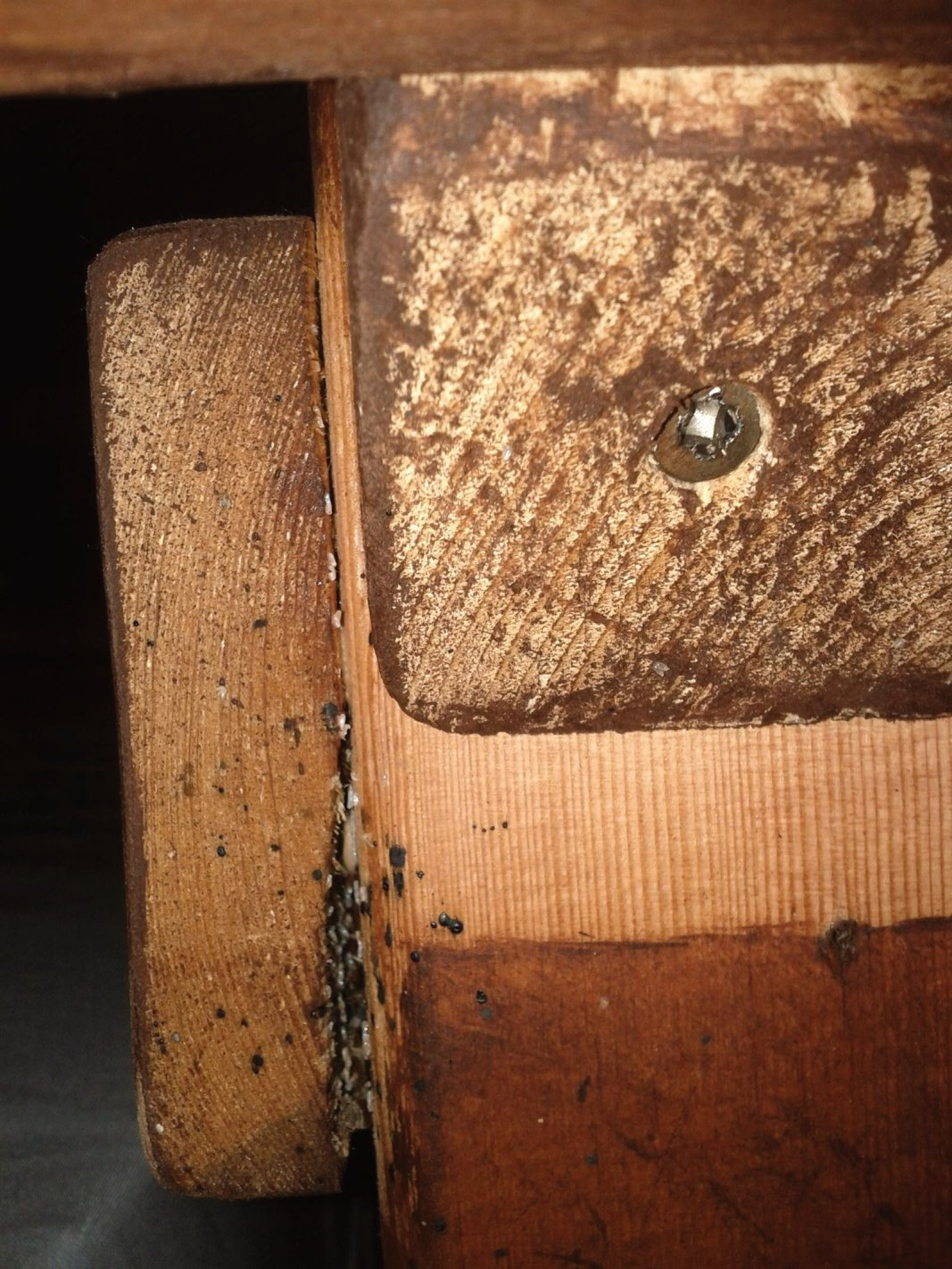 The white spots are Bed Bug eggs in the crevice between the pieces of wood on the bed frame. The dark spots are called Spotting which is Bed Bug excrement.