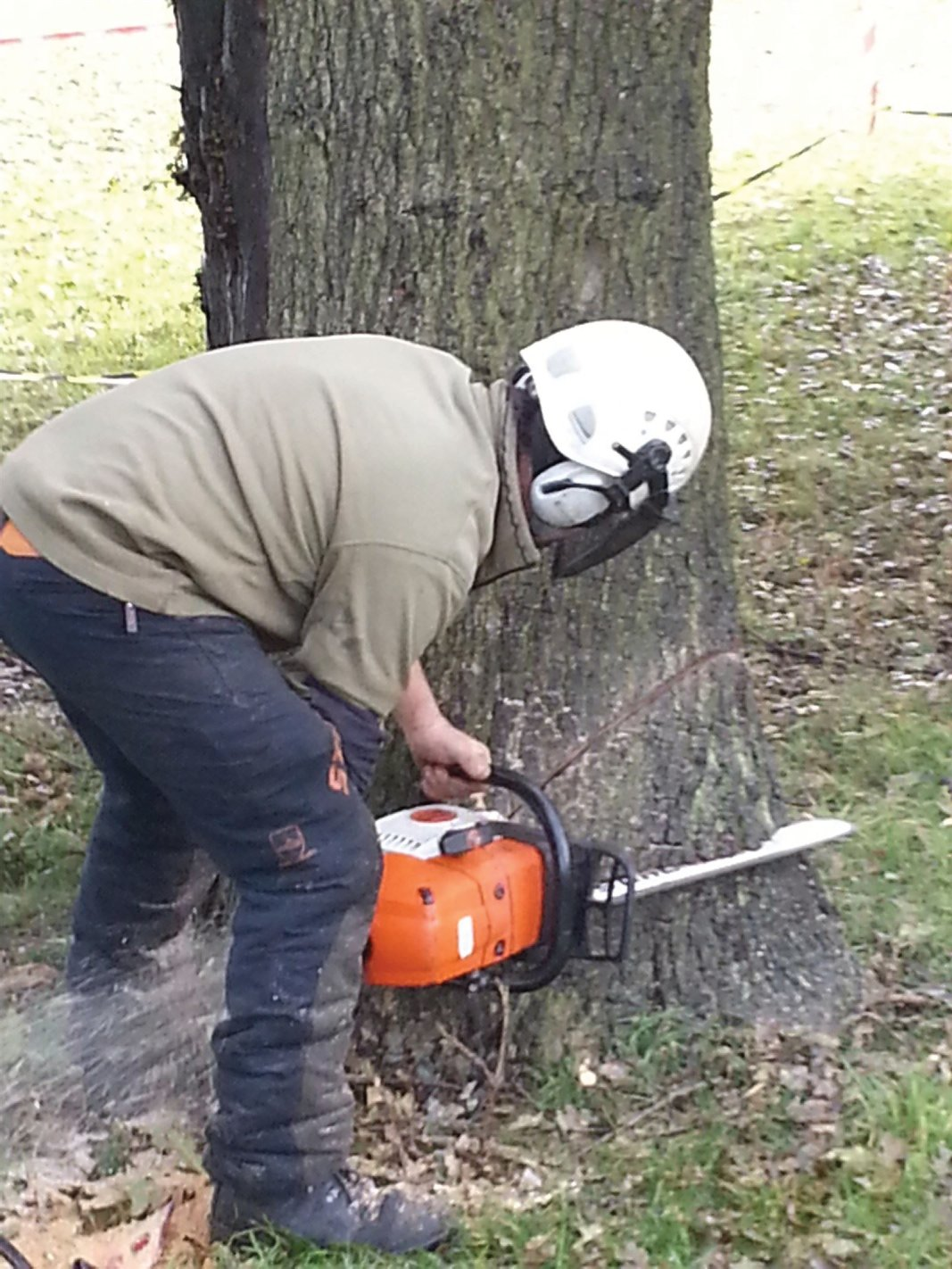 Arborocultural and tree services in industrial areas, factory grounds and business parks in Edinburgh, Midlothian, East Lothian, Fife and the Scottish Borders regions