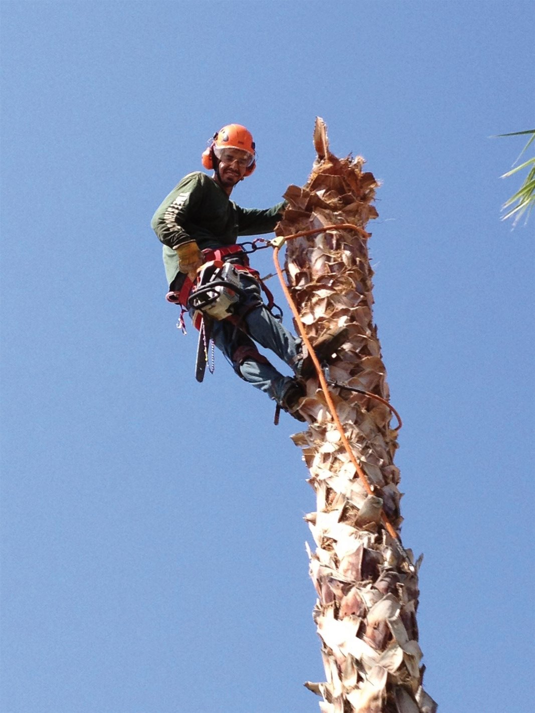 Tree Service Tucson, Arizona.