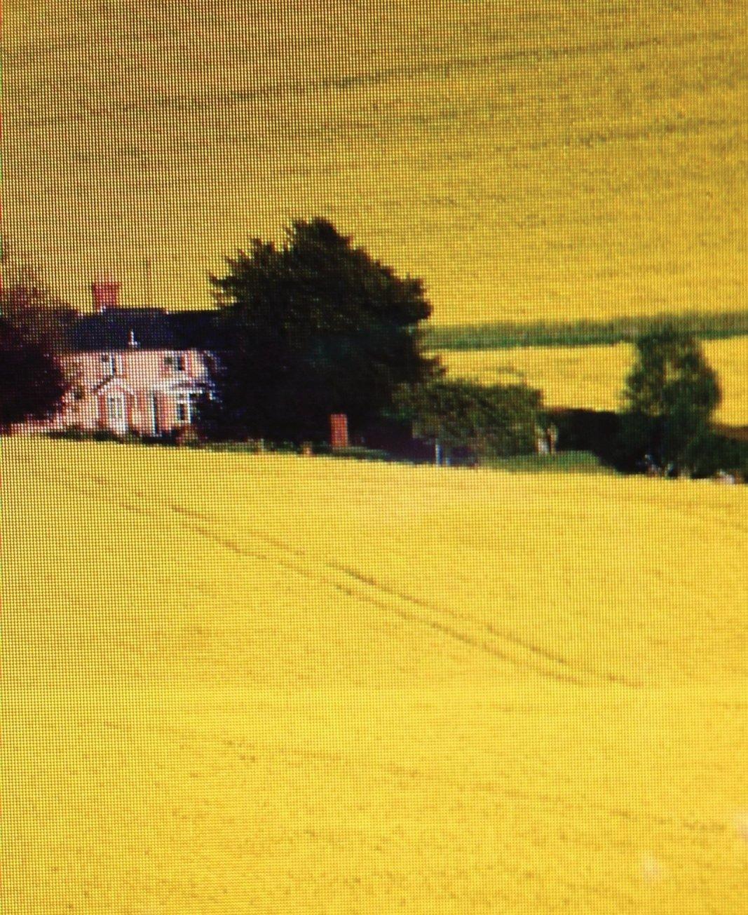 Vast fields of Yellow
