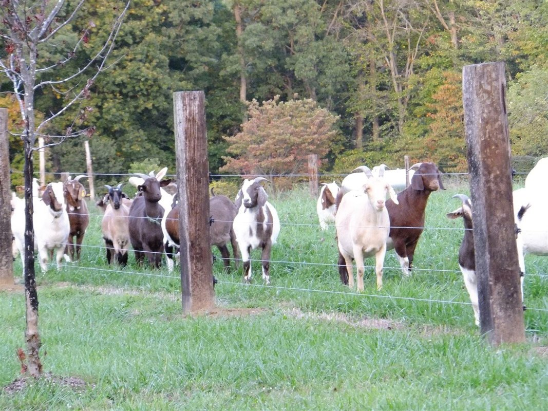 Our girls in the late summer of 2012