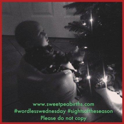 : Sweet Pea enjoying his first Christmas