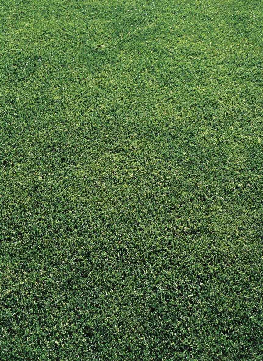when to plant grass, commercial mowing service