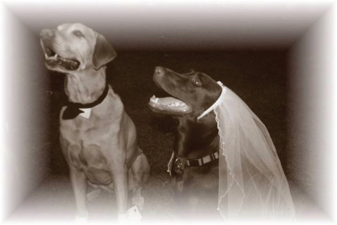 Darby & Cocoa's wedding day.