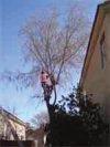 Tree Planting in Tucson, Arizona