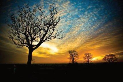 Stress Counseling Nature-sunset trees Ann Arbor, MI
