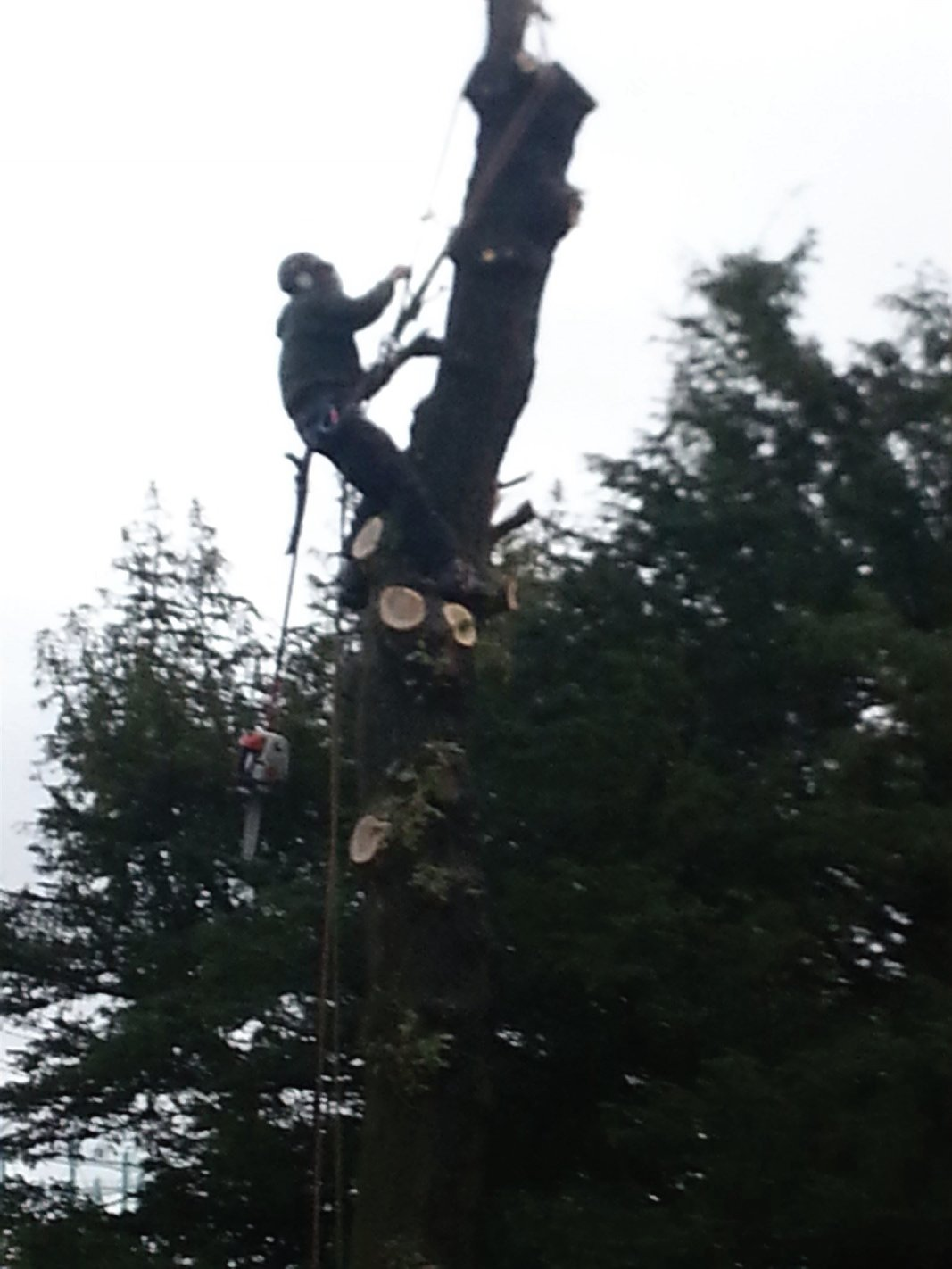 Storm damaged tree surgery works in Edinburgh, Midlothian, East Lothian, Fife and the Scottish Borders regions