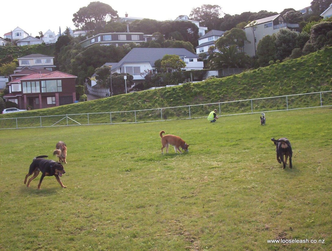 Loose Leash Dog Walking Service Newlands Johnsonville Wellington's visit to Cog Park on 2012-09-13. Cog Park is Wellington's first fully fenced dog park.